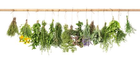Herbes fraîches suspendues isolé sur fond blanc. Basilic, romarin, sauge, thym, menthe, origan, aneth, marjolaine, salé, lavande, pissenlit Banque d'images - 70506501