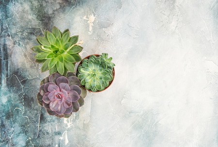 Floral flat lay. Succulent plants on stone background. Top view