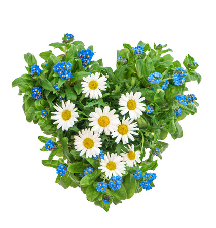 Forget me not and daisy flowers in heart shape on white background