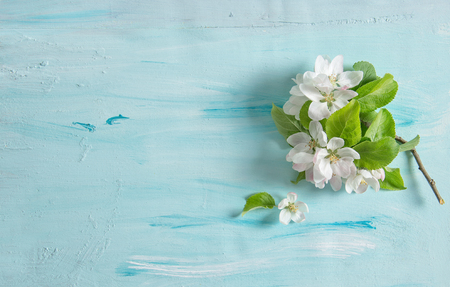 Apple tree blossom spring flowers on blue watercolor background