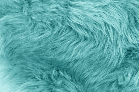 Turquoise blue sheepskin rug background. Wool texture. Close up sheep fur Stock Photo