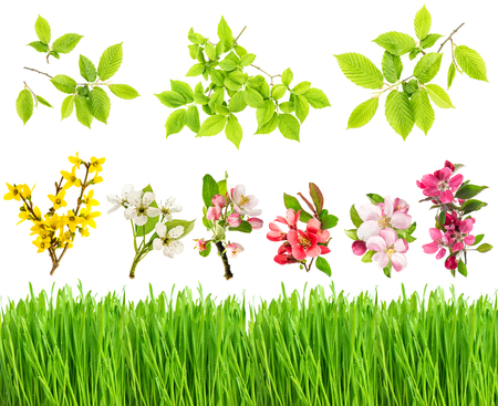 Green grass, spring flowers, tree branches isolated on white background. Blossoms of apple, forsythia, cherry pear. Green leaves