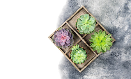 Minimal floral flat lay. Succulent plants on a background