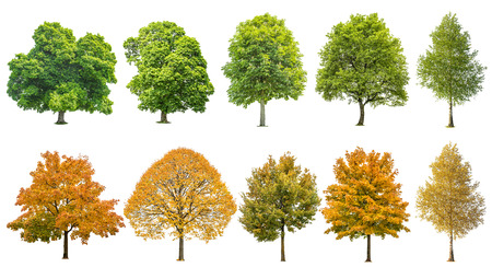 Autumn summer trees isolated on white background. Oak, maple, linden, birch. Green and yellow leaves Foto de archivo