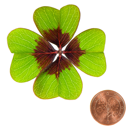Coin and shamrock leaf on white background. Symbols of luck