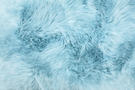 Sheep fur. Blue colored sheepskin rug background. Wool texture Stock Photo