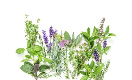 Fresh herbs. Basil, rosemary, sage, thyme, mint, dill, savory, chive, lavender