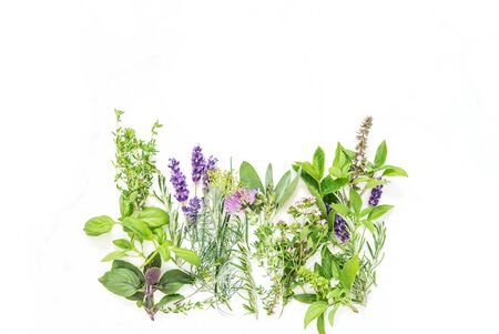 Fresh herbs on white background. Basil, rosemary, sage, thyme, mint, dill, savory, chive, lavender