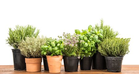 Fresh green potted herbs. Basil, rosemary, thyme, savory on white background Banque d'images