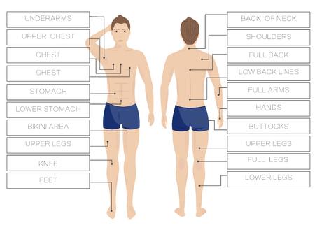 Las zonas masculinas del retiro del pelo del laser. Depilación corporal Área hombres. Frente y detrás