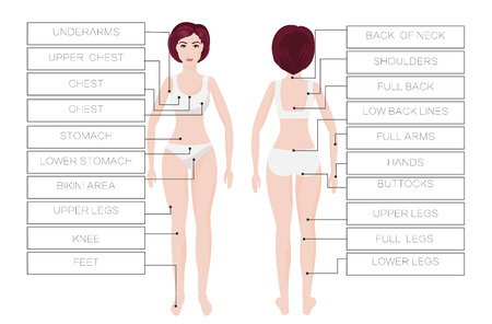 Laser hair removal female zones Stock Illustratie