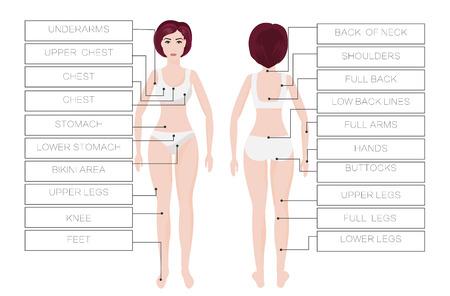 Laser hair removal female zones Vettoriali