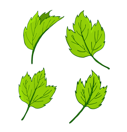 Set of elements for decor leaves. vector Illustration