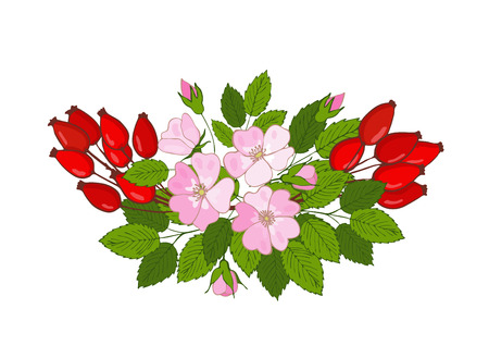 brierbouquet of flowers and berries. branch of a dogrose. Vector