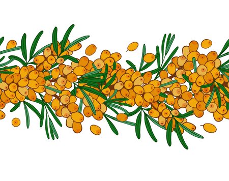 seamless ornament branch of sea buckthorn with berries. Vector illustration.