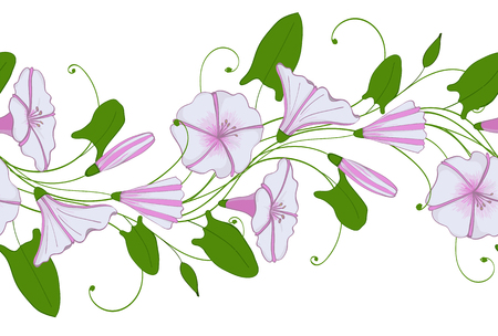 A Seamless pattern of white and pink convolvulus. Garland with bindweed flowers of Morning-glory tender ornament
