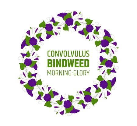 Garland with blue bindweed flowers. Element for design wreath morning-glory. Ilustração