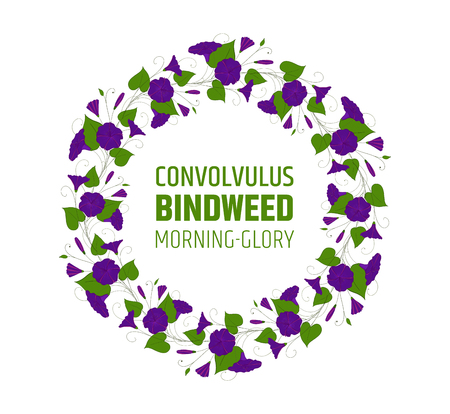 Garland with blue bindweed flowers. Element for design wreath morning-glory. Vettoriali