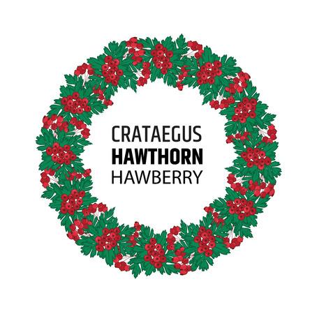 Een krans van herfst meidoorn bessen. Crataegus of haw ornament.