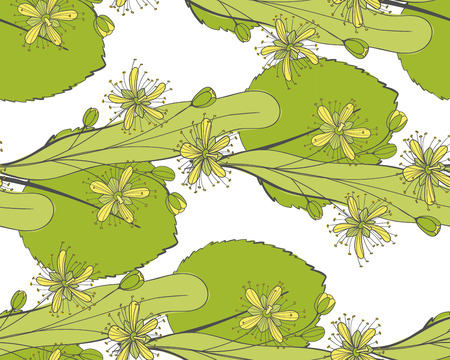 Seamless linden pattern. Ornament of a branch of a Tilia tree. Background of a basswood. Limetree or tree.