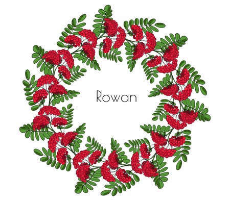 Wreath red rowan tree. Ornament twig of rowanberry or ashberry. Vector decorative element circlet leaves and cluster of sorbus berry.