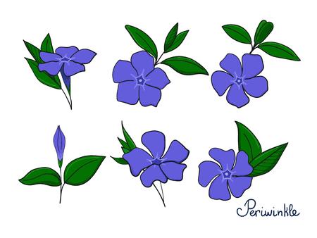 Définissez les éléments d'isolement de la pervenche. fleurs, bourgeons et feuilles de vinca. Collections de vecteurs