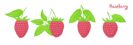 Set of isolated forest berries. Pink raspberries with leaves. Vector