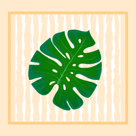 Foliage monstera. Trend element of the palm leaf design on a abstract background. Tropical exotic and home plants