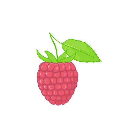 Raspberry. forest pink berries with leaves. Sweet fruit. Single isolated on white. Illustration