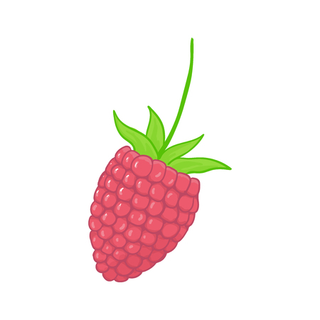 raspberry. forest pink berries. Sweet fruit. Single isolated on white. Illustration
