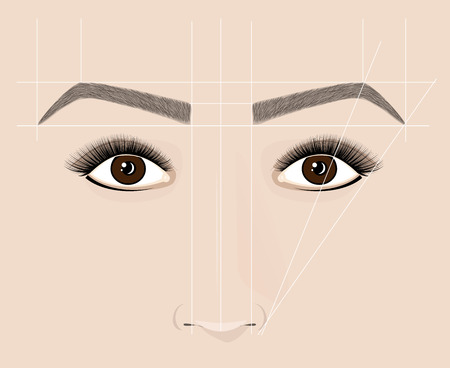 Classical shape of eyebrows. Microblaining and permanent make-up. The scheme of the correct construction. Illustration