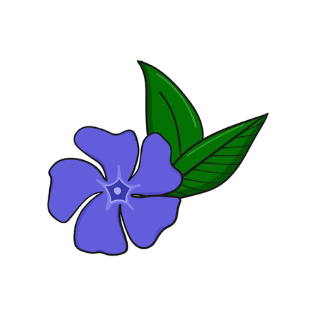 Periwinkle blue flower from above. Bud and leaves of vinca. floral decorative element