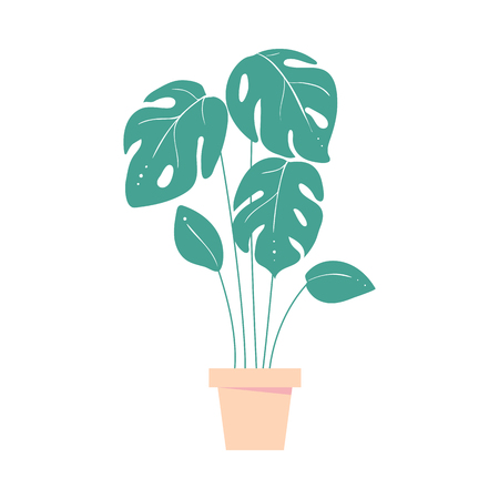 monstera leaves . Home tropic plant in pot. Exotic leaf of palm. Isolated vector illustration