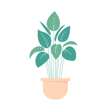 houseplant in pot. Isolated flowerpot . Home exotic plant. Vector illustration
