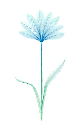 Flower x-ray or blend effect. Floral design. Elegant bloom. Vector