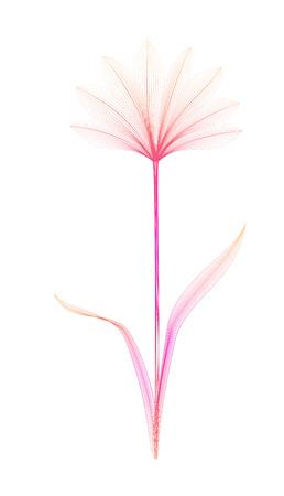 Flower x-ray or blend effect. Floral design. Elegant bloom. Vector