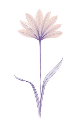 Effet de rayon X ou de mélange de fleurs. Art floral. Floraison élégante. Vecteur