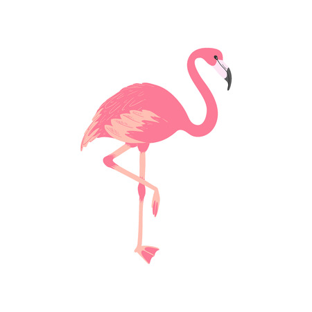 Pink flamingo. Isolated exotic bird. Tropic animal. Summer vector illustration