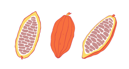 Cocoa fruit set. Chocolate cocoa beans. Vector Isolated illustration.