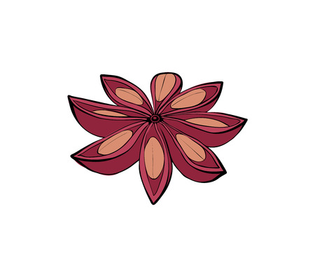 Cinnamon Star. Isolated fruit spices for baking. Vector