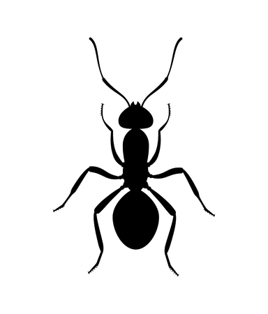 Ant black silhouette top view. Icon or insect symbol.