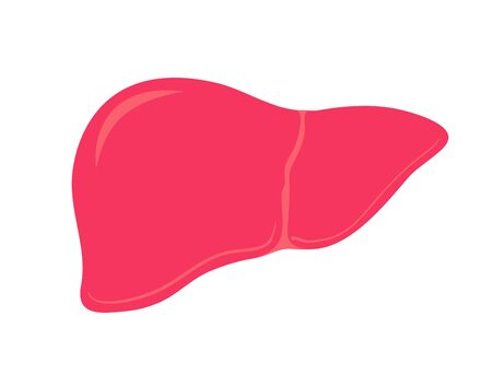 Liver. Isolated human organ. Medicine and Health. Vector Illustration 向量圖像