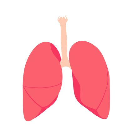 Lungs. Isolated human organ. Medicine and Health. Vector illustration