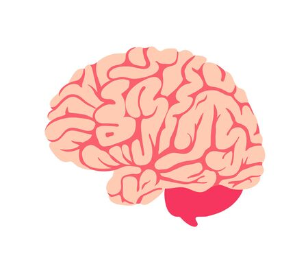 Brain. Isolated icon. Symbol of mind and intellect. Illustration