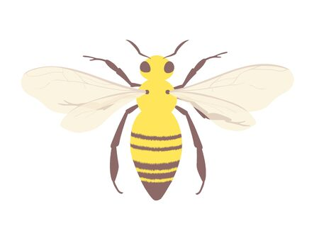 Honey bee symbol of beekeeping and apiaries. Isolated insect vector illustration