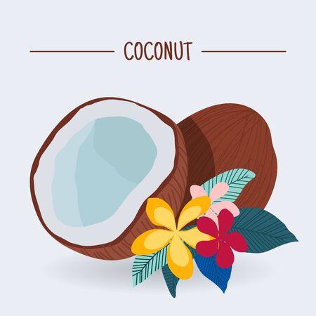 Coconut with frangipani flower, plumeria. Vector