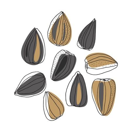 Illustration of sunflower seeds