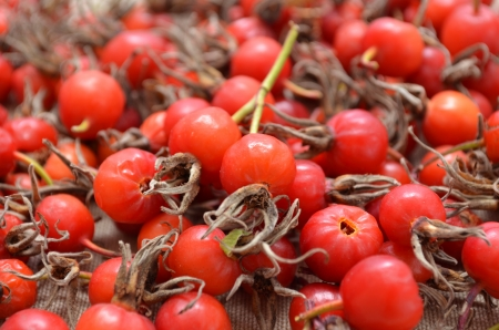 Dry berries of dog-rose