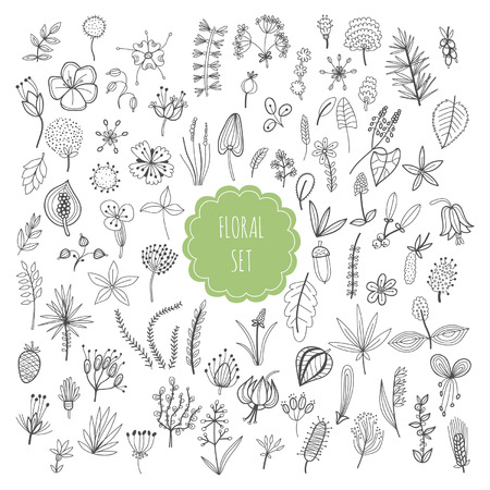 Floral set, plants and herbs Vector