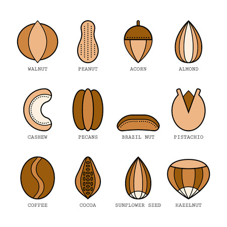 Set of flat colored icons with different nuts, illustration for design